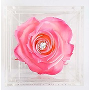 A 100% real rose that lasts a year - the...