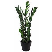 Leaf leaf-7566 design uk grande plante...