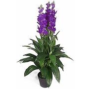Feuille d'orchidée artificielle cymbidium - pot...