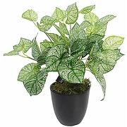 Plante artificielle en caladium avec pot 40 cm