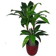 Leaf design uk plante artificielle à triple...