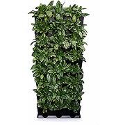 Minigarden vertical kitchen garden pour 24...