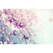 Scenolia tableau sur toile fleurs du japon 60 x...