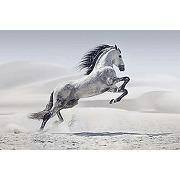 Scenolia tableau sur toile cheval dans le...