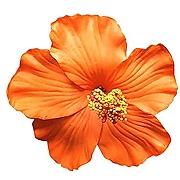 Barrette fleur de hibiscus barrette fleurs...