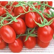 Rouge tomate olivette 30 graines - heirloom