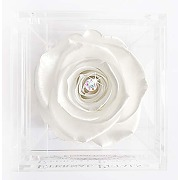 A real rose that lasts a year - white gold solo...